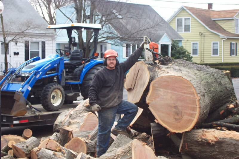 Passion for Trees with decades of experience with tree maintenance in Southington CT