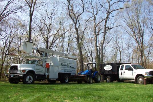 Tree Removal by Passion for Trees Southington CT