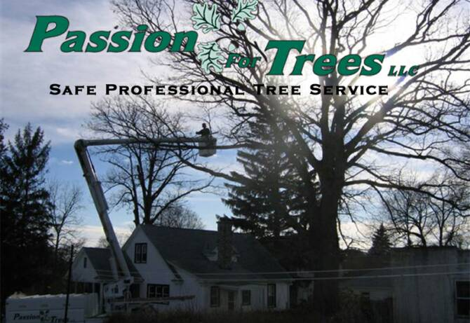 Passion for Trees Southington CT 06489, Tree Climber, Tree Service, Tree Removal, Tree Climbing,Tree Cabling and bracing, Tree Care Maintanence , Stump Grinding, Tree Health, Tree Care Maintanence, Arborist,